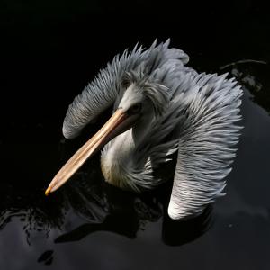 Big bird III